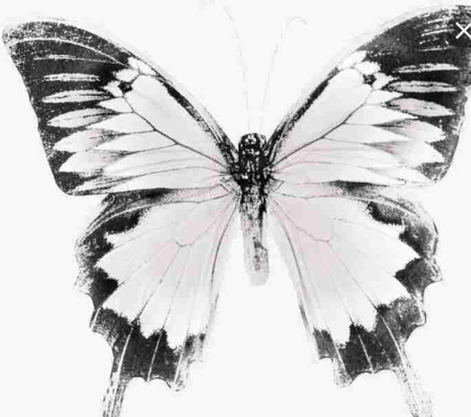 قصص واقعية الفراشة الأم