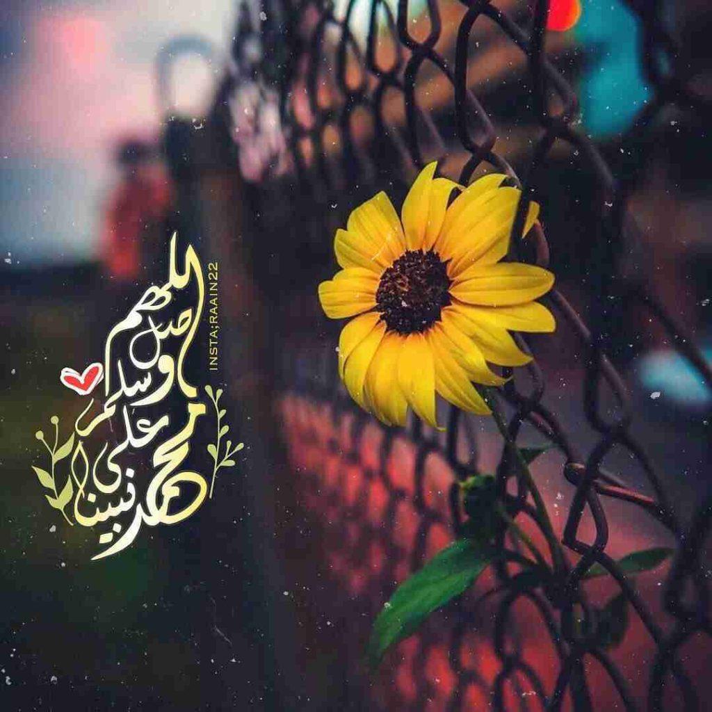 المولد النبوي..
